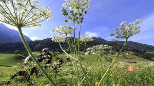 RIDE 07 - Tirol - Stubaier Alpen Tourentipp
